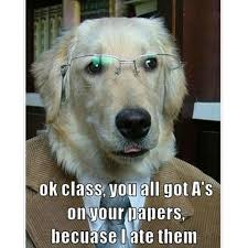 Dog With Glasses Meme - the top 100 dog memes of 2017 pro pooch