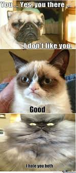 Grumpy Dog Meme - rmx grumpy dog vs grumpy cat take 2 by caden123 meme center