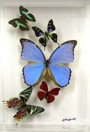 butterflydecorl jpg