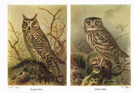 vintage owls image knick of time