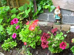 urban gardening in amsterdam expat republic