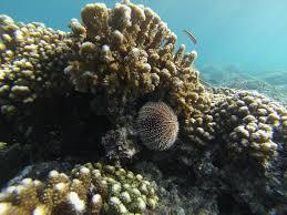 acidification study offers warnings for marine life habitats
