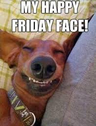 Funny Dog Face Meme - my friday happy face funny dog meme never shutup nevershutup net