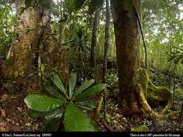 madagascar native plants madagascar u0027s tropical rainforest