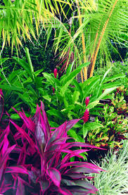 Tropical Gardening Ideas Tropical Landscaping Ideas For Front Yard Amys Office