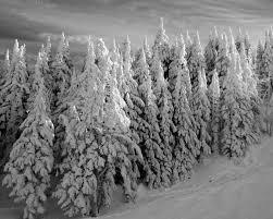 Black Forest Home Decor Winter Home Decor 8x10 Black And White Landscape Photography Ski