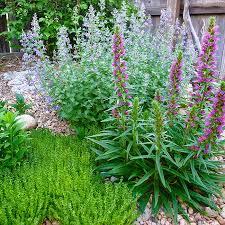 Rock Garden Cground Mountain Gardening Groundcovers Solve Landscape Problems