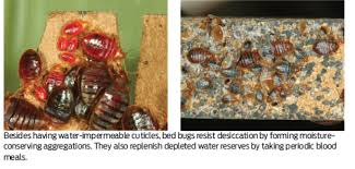 How Long Can Bed Bugs Live Without Air Bed Bug Supplement Diatomaceous Earth Where Do Pct Pest