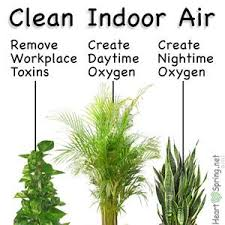 best plants for air quality 14 diy ideas for your garden decoration 1 air filtering plants