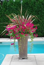 Patio Plants For Sun Best 25 Container Plants Ideas On Pinterest Container Flowers