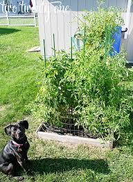 end of summer garden update
