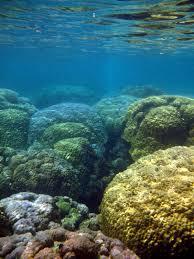ocean acidification smithsonian ocean portal