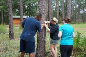 Calculate Your Carbon Footprint Worksheet Southeastern Forests And Climate Change U2013 Activity 8 Counting Carbon