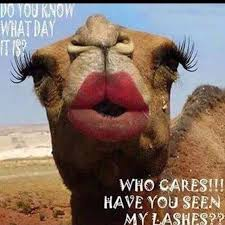 Camel Meme - hump day camel with makeup pictures photos and images for facebook