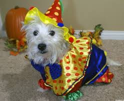 matching dog and owner halloween costumes 20 pawsome halloween costume ideas for your dog anything pawsable