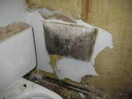 black mold behind the bathroom wall just because you don u0027t see