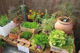 top tips for creating your own herb garden go to 4 gardening