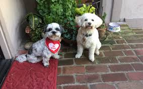 Pet Friendly Hotels With Kitchens by Pet Friendly Carmel Lodging Book Your Vacation Today