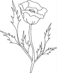 drawing california poppy colouring colouring tube