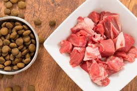 is raw meat safe for dogs petcha