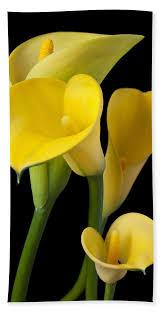 yellow calla four yellow calla lilies bath sheet for sale by garry