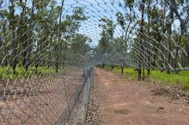home decor stores australia cat proof fence in kakadu aims to establish role of cats in mammal