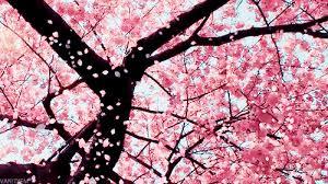 tree wiki amino