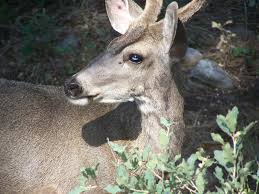 New Mexico wild animals images How many new mexicans are feeding wild animals ruidoso rent jpg
