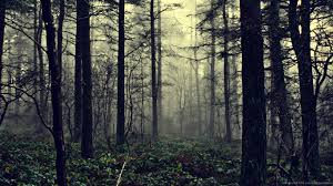 halloween forest background download 1366x768 foggy forest wallpaper