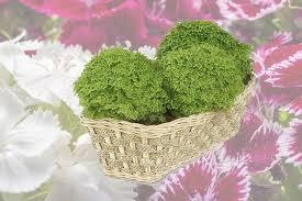 of ornamental plants