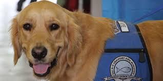 Comfort Retrievers Comfort Dogs Help Orlando Heal Following Shooting The Daily Dot
