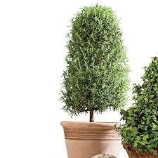 72 best topiaries images on topiaries garden and