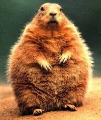 31 groundhog religious holiday rev dr paul