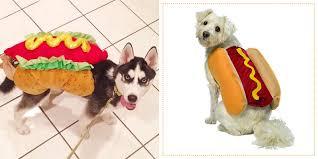 Puppy Halloween Costumes 29 Dog Costumes Halloween 2017 Cute Halloween Costumes