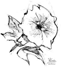 carnation flower tattoo drawing fresh flower bouquets