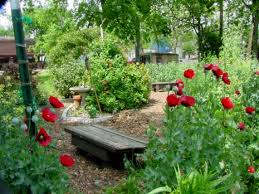 How To Plant A Vegetable Garden In Your Backyard by How To Work Vegetables Into Your Front Yard Landscape Houston