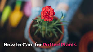 Our Favorite Plants How To by How To Care For Potted Plants Real Simple