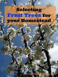 Best Fruit Tree For Backyard How To Grow Fruit Trees Orchards Fruit Trees And Gardens