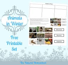 animals in winter migration hibernation u0026 adaptation free