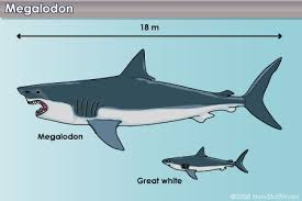 biggest megalodon shark interesting facts to know about megalodon sharks kimi oge