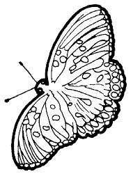coloriage à imprimer papillon