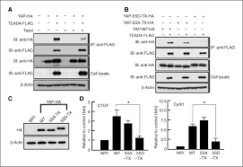 Yap Flag Yap Induced Resistance Of Cancer Cells To Antitubulin Drugs Is