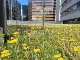 Rock Garden Bellevue by Bellevue City Hall American Hydrotech Inc