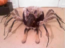 Dog Halloween Costumes 44 Halloween Dog Costumes Images Animals