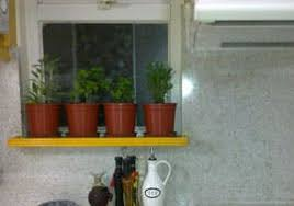 tips for healthy indoor herb garden apartment therapy