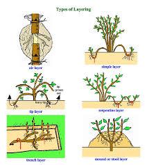 best 25 plant propagation ideas on propagate aloe