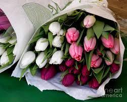 tulip bouquets tulip bouquet photograph by lainie wrightson