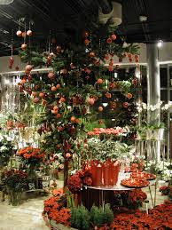 growing holiday plants u2013 how to care for holiday plants