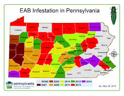 emerald ash borer map emerald ash borer threatens all ash trees in america