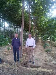 file commercial forestation in iran in an artificial forest